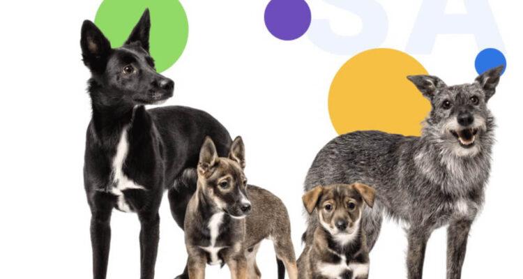 SaveUS – белорусская платформа помощи бездомным животным стала еще удобнее